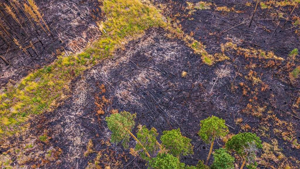 Les prises de vue par drone donnent un aperçu de l'étendue des dégâts causés par le feu. © Greenpeace