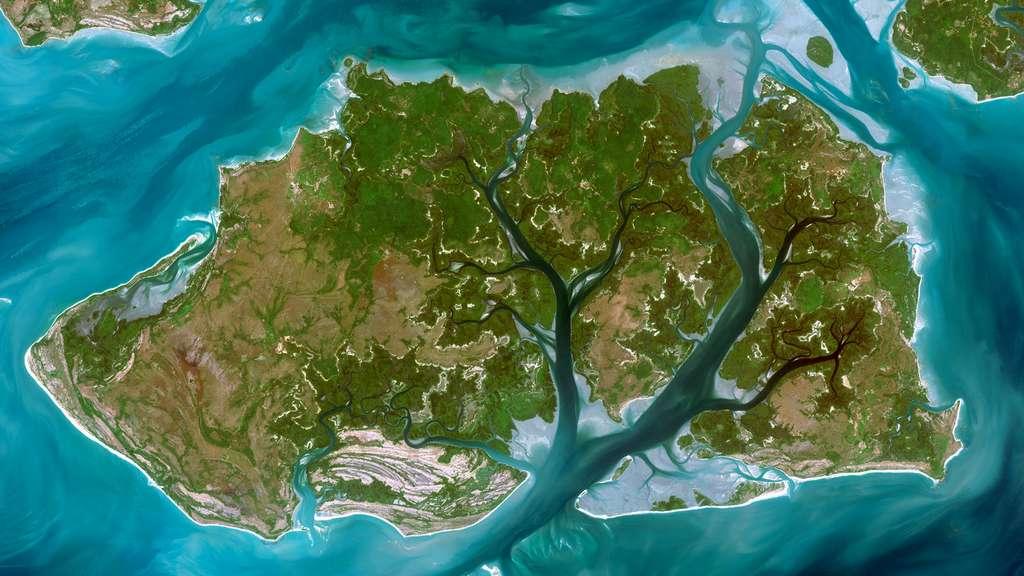 Un fleuve telle la ramure d'un arbre en Guinée-Bissau