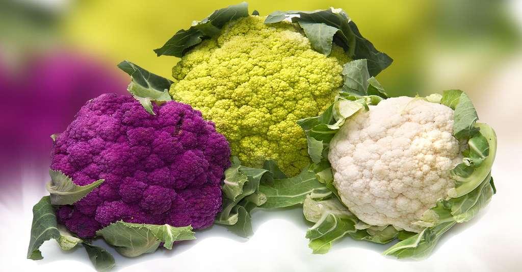 Les diverses couleurs des choux-fleurs. © lsantilli, Shutterstock
