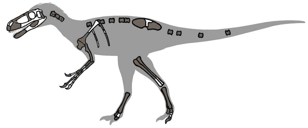 Eotyrannus, un ancêtre du tyranosaure