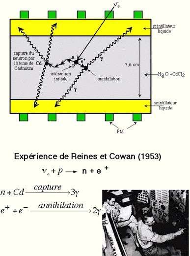 Fig. 9 - Réactions de détection dans un détecteur (liquide scintillant) placé auprès d'un réacteur.