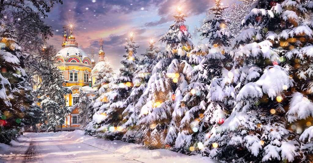 Sapins de Noël couverts de neige en Russie. © Pikoso.kz, Shutterstock