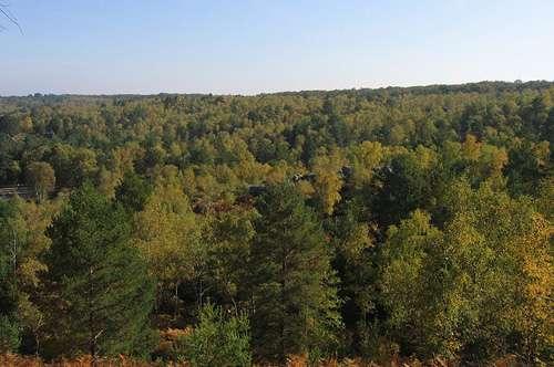 Forêt de Fontainebleau. © GNU FDL 1.2