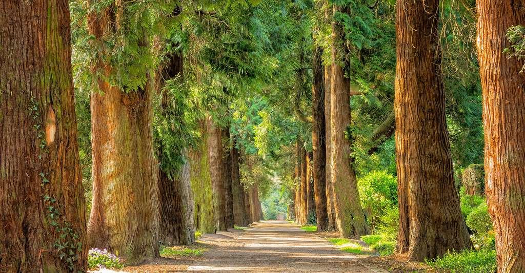 Isolation en fibre de bois : les avantages. © Tama66, Pixabay, DP