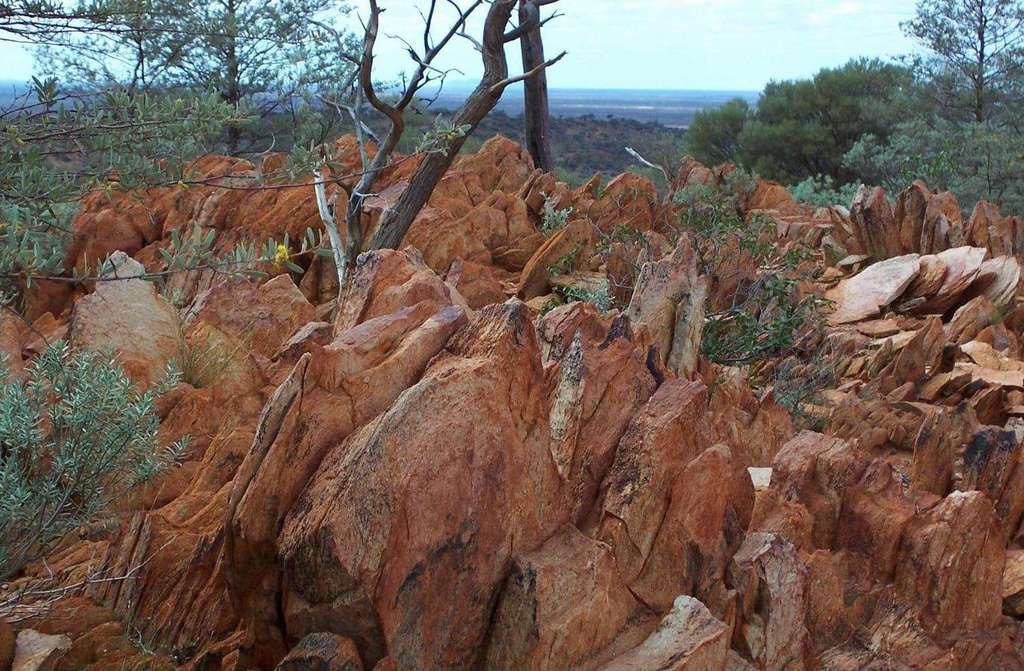 La région des Jack Hills, en Australie, est célèbre dans le monde de la géologie. Âgées d'au moins 3,6 milliards d'années, les roches sédimentaires qui s'y trouvent contiennent des zircons détritiques très anciens ; certains dateraient même d'il y a 4,4 milliards d'années. Les géochimistes font parler de tels zircons pour tenter de comprendre ce qui s'est passé sur Terre pendant l'Archéen et l'Hadéen. © Bruce Watson, Pnas