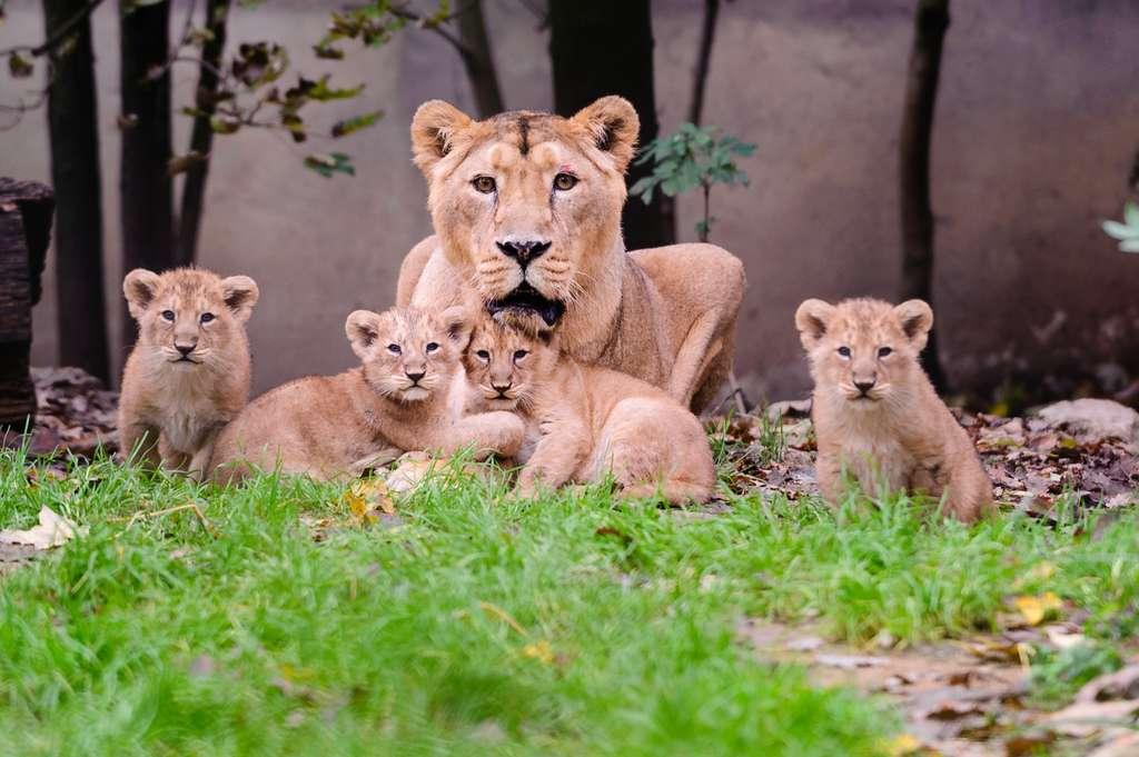 Photo de famille. © Guilhem de Lepinay/Parc zoologique et botanique de Mulhouse