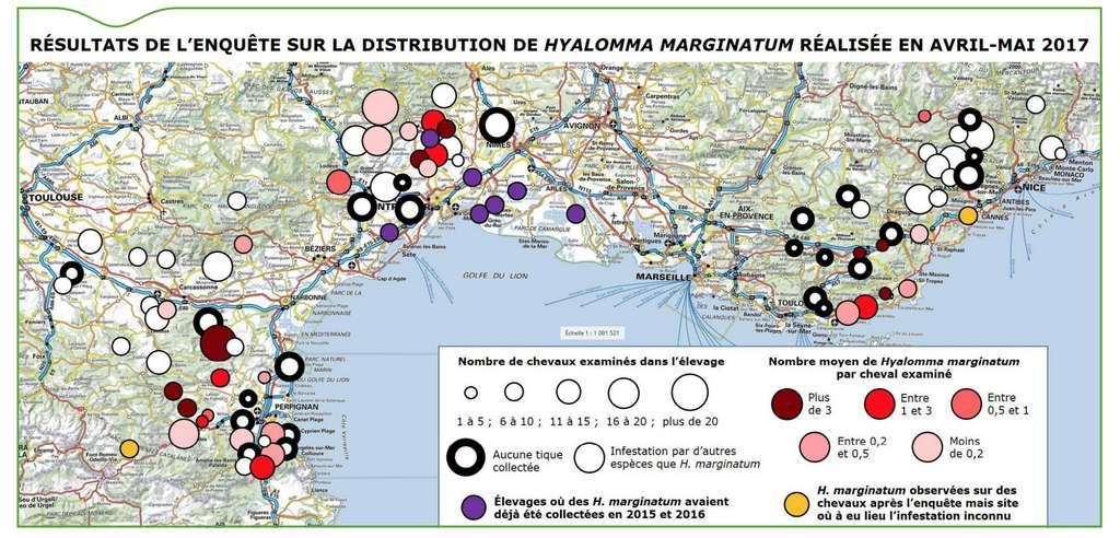 Carte de la présence de Hyalomma marginatum dans le sud de la France réalisée à partir des données de 2017. Aujourd'hui, cette tique est présente jusqu'en Ardèche et des individus ont été observés en Haute-Savoie et dans les Alpes-Maritimes. © Tiré du Bulletin épidémiologique santé animale - alimentation de mai 2018