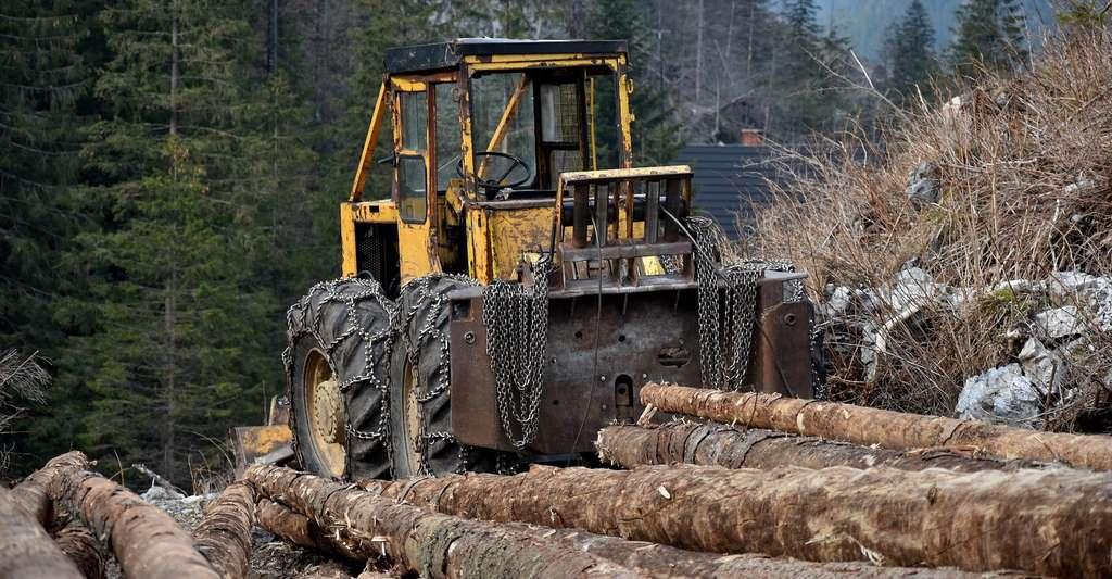 Le tonnage de bois coupé annuellement a augmenté de 45 % depuis 1970. © Eloneo, Pixabay License