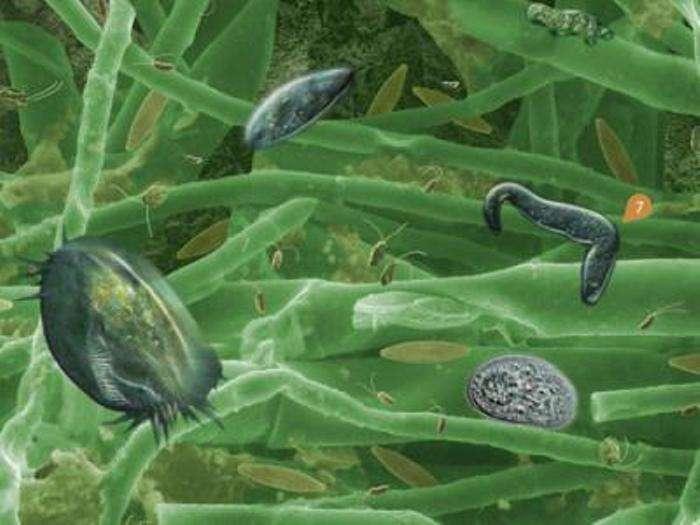 Représentation d'une communauté d'organismes vivant dans un biofilm aquatique. © Andrew Dopheide, Gillian Lewis