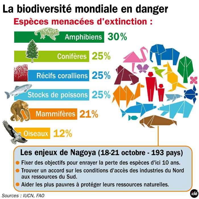 En 2010 déjà, la conférence de l'Onu sur la biodiversité, à Nagoya, tirait un bilan et fixait des objectifs pour freiner la disparition des espèces. © Idé