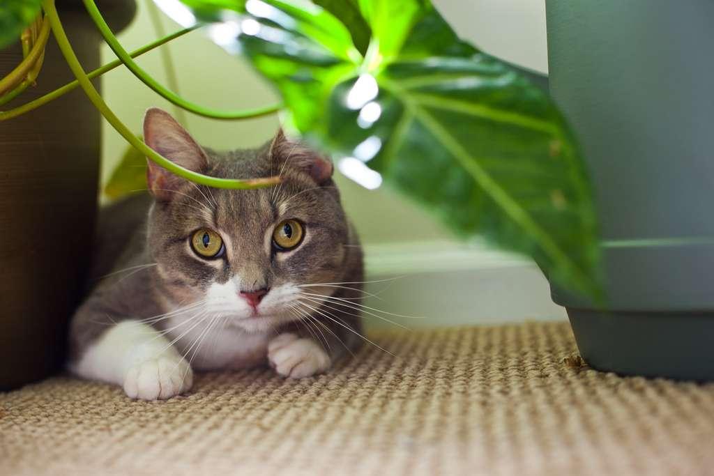 Un chat élevé en appartement a besoin d'un perchoir et de distraction. © Zlatko Unger, Flickr