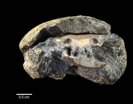 Le fossile découvert au Kansas. La tomographie en permet une analyse non destructive. (Cliquer sur l'image pour l'agrandir.) © PNAS