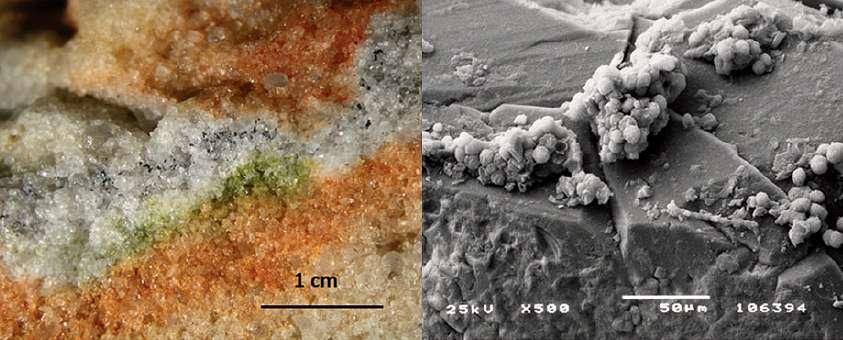 À gauche : section de roche colonisée par des micro-organismes cryptoendolithiques; à droite : ces mêmes types de champignons (Cryomyces) dans des cristaux de quartz au microscope électronique. © S. Onofri et al.