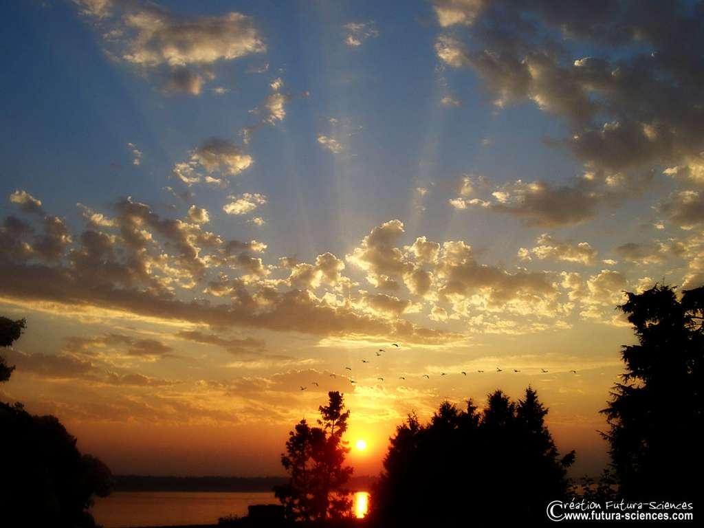 Oiseaux au coucher du soleil