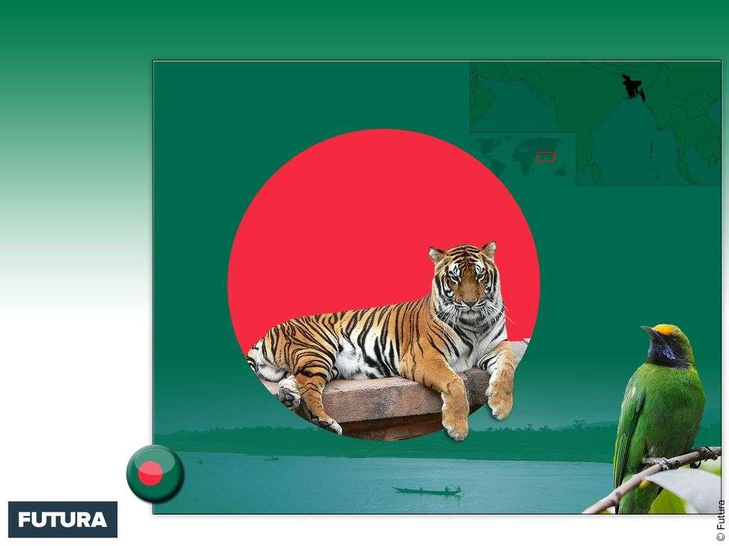 Drapeau : Bangladesh