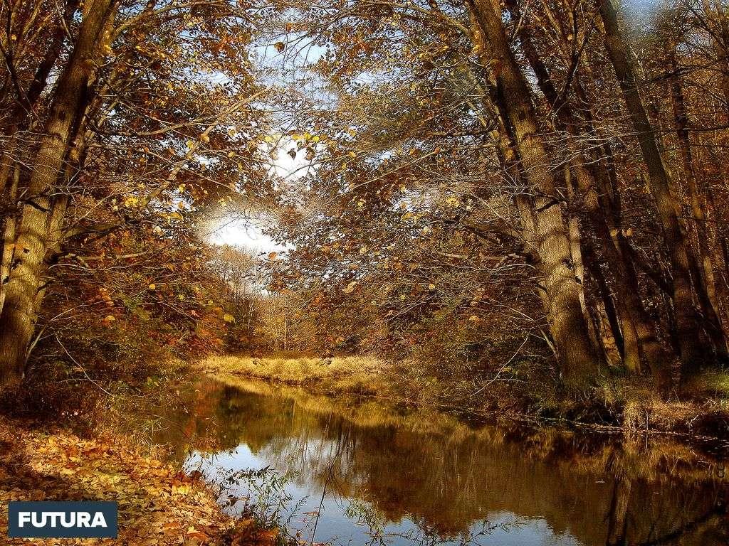 Forêt automnale - Etats Unis