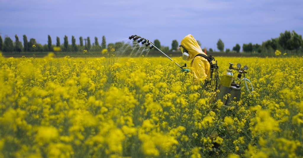 Le réchauffement climatique et la perte des habitats naturels due au développement urbain sont parmi les principales causes du déclin des abeilles sauvages. Il faut y ajouter notamment, l'usage des pesticides. © RolandMihaly, Adobe Stock