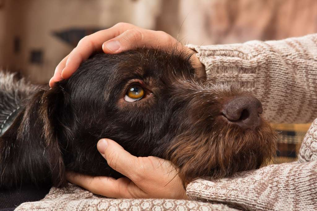 Les yeux dans les yeux, humain et chien ont leur taux d'ocytocine qui monte en flèche, selon des travaux menés au Japon. © Rodimovpavel, Adobe Stock