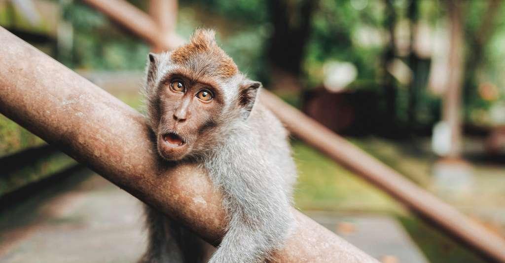 Même les singes préfèrent les marques associées à une publicité sexuelle. © Jared Rice, Unsplash