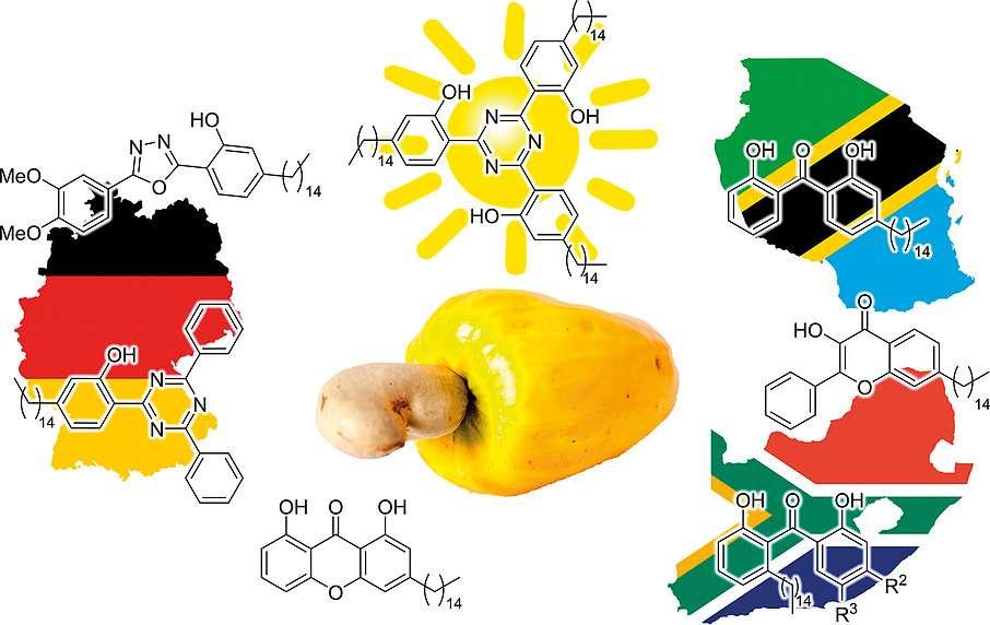 Des chercheurs ont synthétisé, à partir de coques de noix de cajou, des composés aromatiques capables d'absorber les UV. Ils devraient pouvoir servir à la fabrication de nouvelles crèmes solaires, mais aussi pouvoir être intégrés dans la formulation de polymères ou de revêtements anti-UV. © Université de Witwatersrand