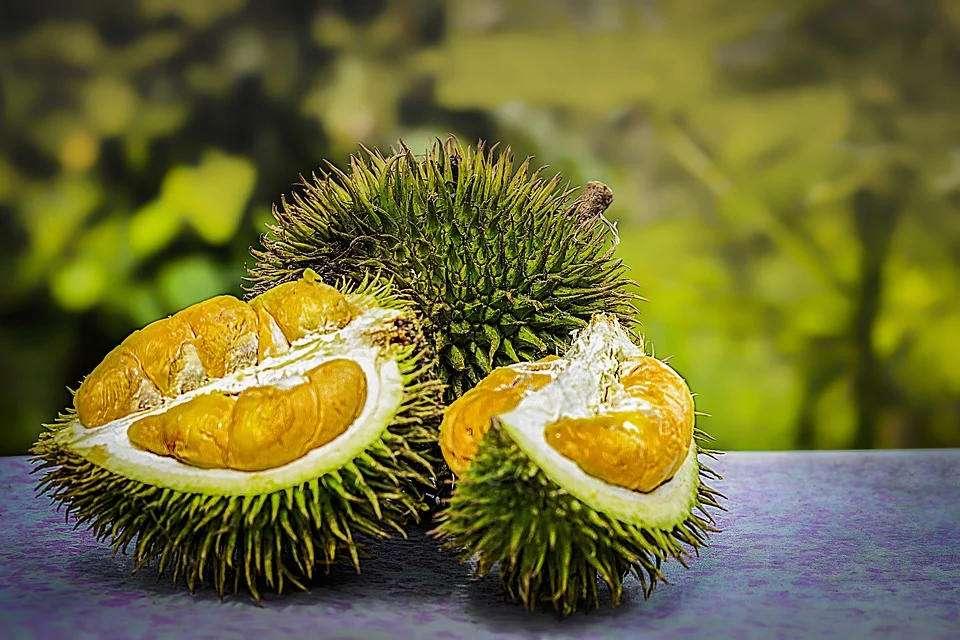 Surnommé « le roi des fruits », le durian sent horriblement mauvais mais son goût est exquis. © Pixabay