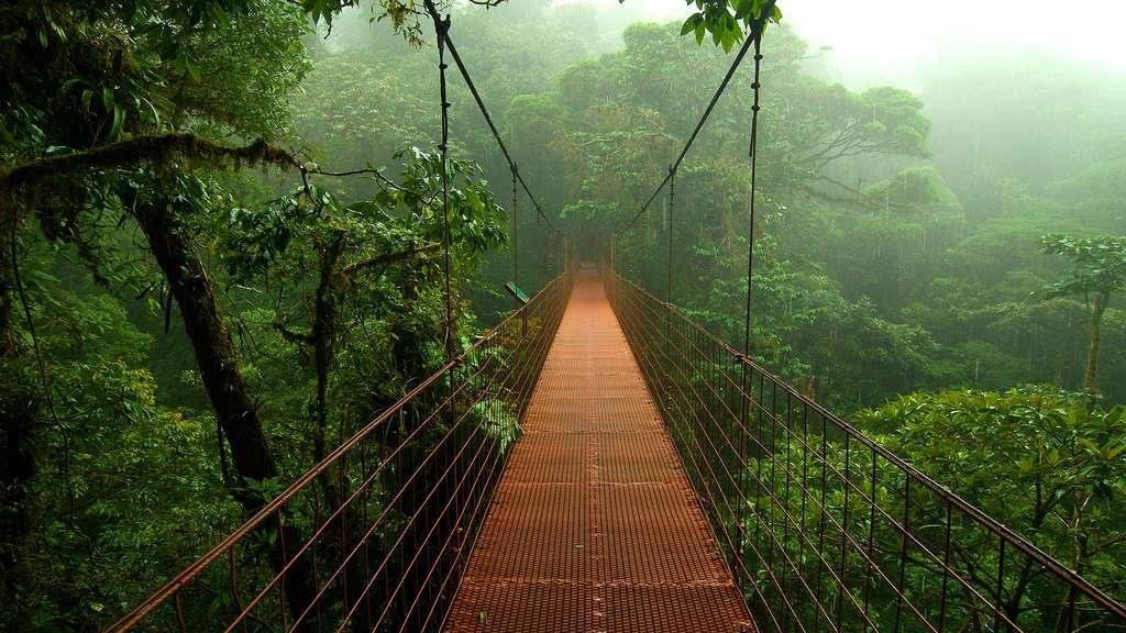 Pont suspendu dans la canopée des forêts de nuages