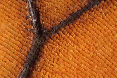 Quand la technique s'inspire de la nature. Ici, une aile de papillon. © Hersandesign 2004, vol-de-papillon.com
