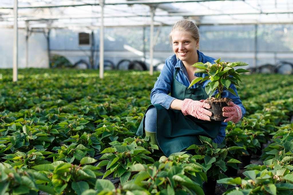 Expert des plantes et de la terre, l'horticulteur sait quelle plante ou fleur il doit planter en fonction de son sol, du calendrier et du climat. © JackF, Adobe Stock.