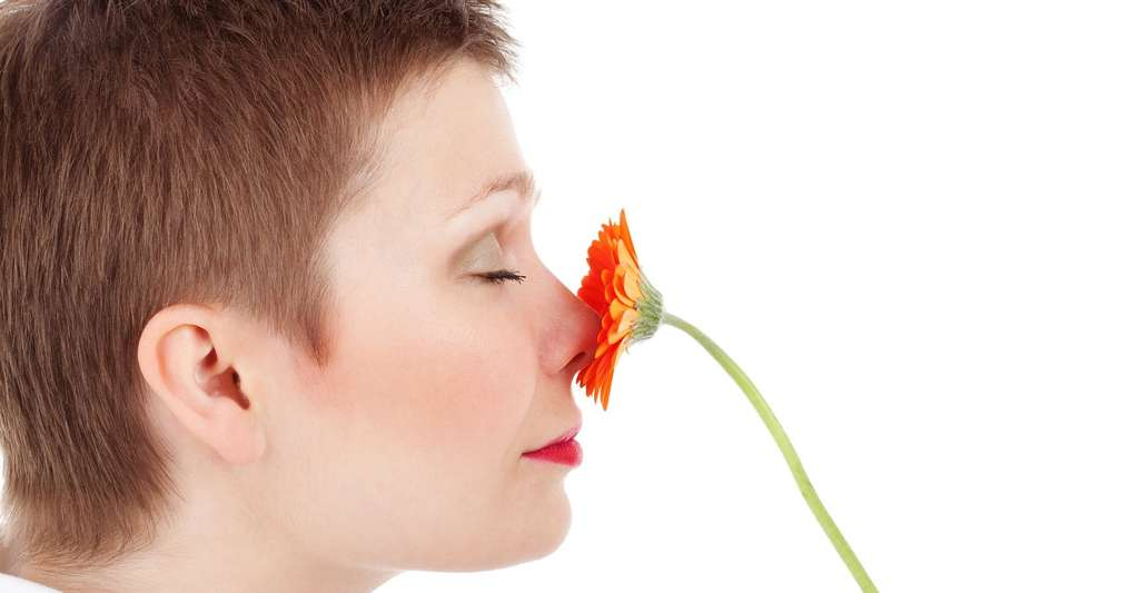 Grâce au cycle nasal, nous avons accès à un plus large panel d'odeurs. © PublicDomainPictures, Pixabay, CC0 Public Domain