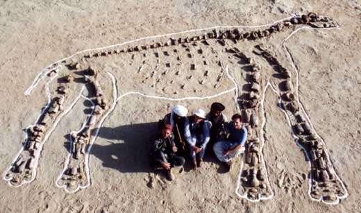 En 2000, la mission suivante permet de compléter largement l'échantillon disponible. Le squelette est à nouveau reconstitué, mais cette fois à même le sol et sous son profil droit. © 2000 MPFB