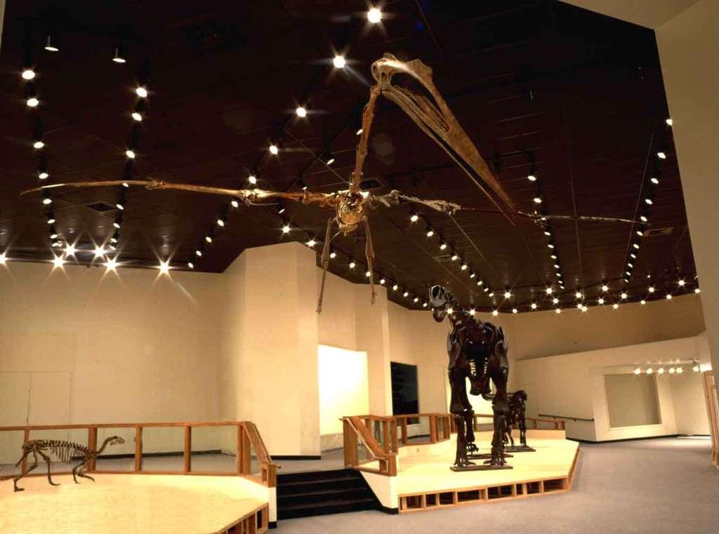 Ce squelette articulé de Quetzalcoaltus est exposé au musée de la Texas Tech University. Ce ptérosaure a vécu en Amérique du Nord au Crétacé supérieur, voici 68 à 65,5 millions d'années. Le crâne pouvait atteindre jusqu'à 1,5 m de long. © Texas Tech University