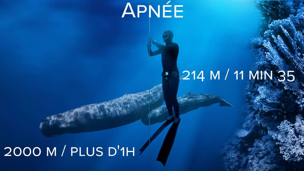 Apnée : le cachalot maître des profondeurs