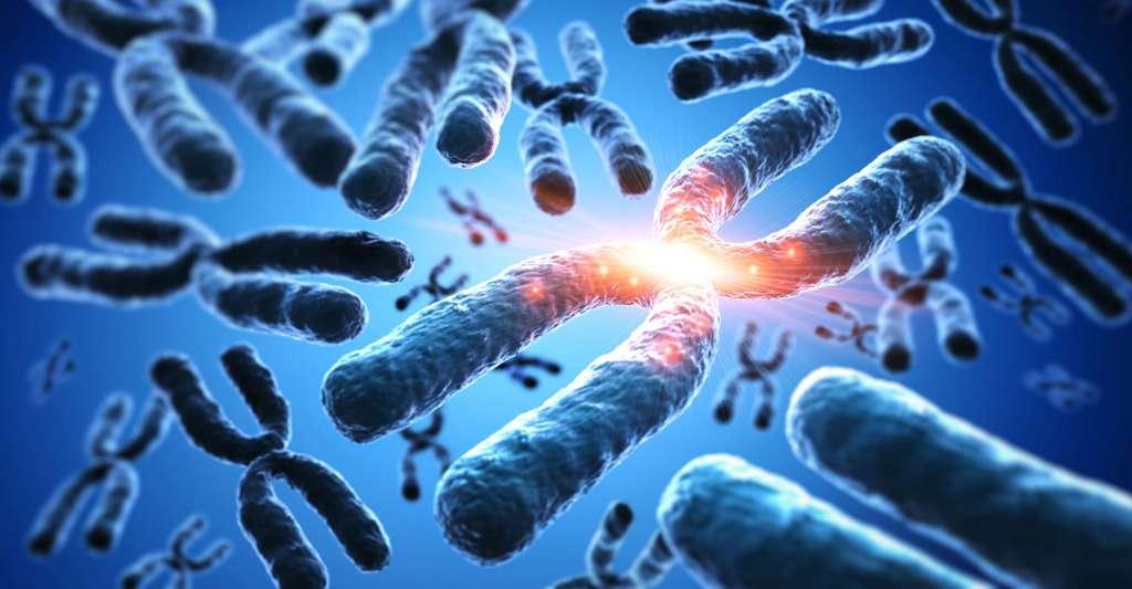 Homme et singe : ce que disent les chromosomes. © Psdesign1, Fotolia