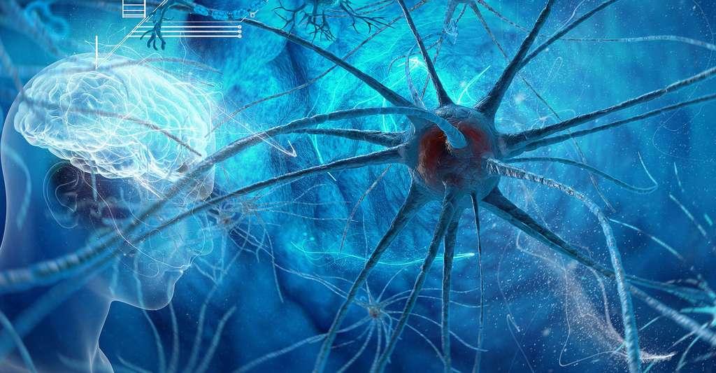 Neurones. ©Vitstudio, Shutterstock