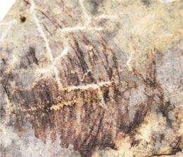 Les traces de protoplumes, qui font plutôt penser à un ornement. © X-T Zheng et al.