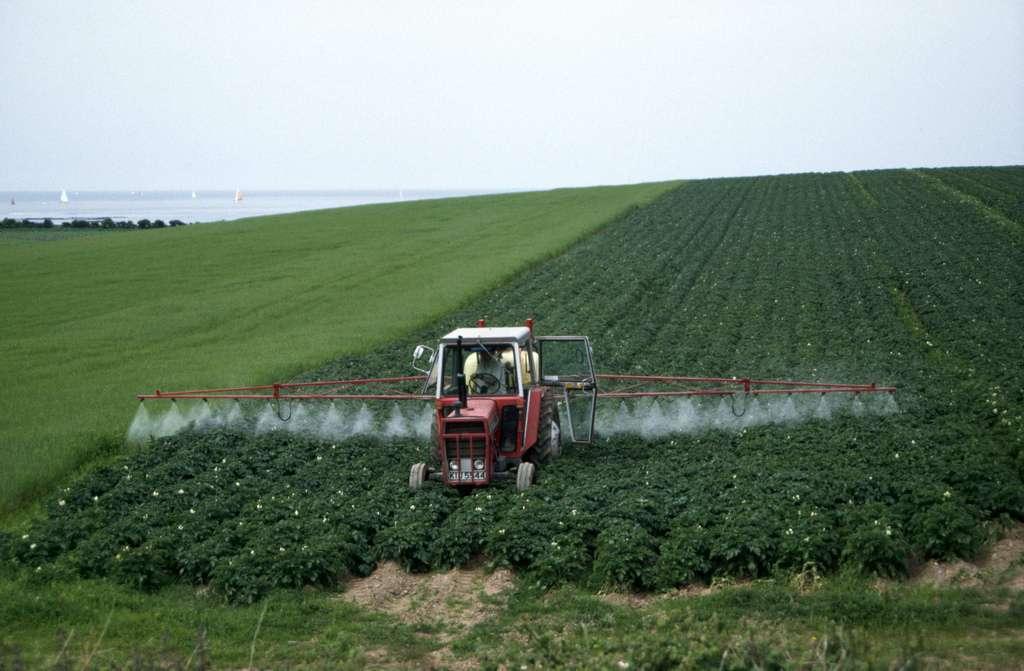 Dans certaines cultures, les pesticides sont épandus massivement. La technique n'a rien de nouveau et déjà par le passé, certains produits ont été utilisés à foison, ce qui explique que certains composés, interdits depuis des années, sont encore présents dans le sol. © tpmartins, Flickr, cc by nc sa 2.0