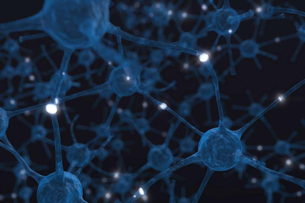 Les synapses sont les zones de communication entre deux neurones. La protéine Nptn, impliquée dans le fonctionnement de ces liaisons synaptiques, contrôlerait en partie la quantité de matière grise présente dans le cerveau. © Birth Into Being, Flickr, cc by nc sa 2.0