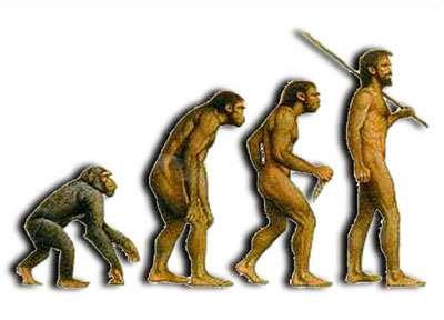 Modèle ancien de l'évolution de l'homme, aujourd'hui abandonné. © DR