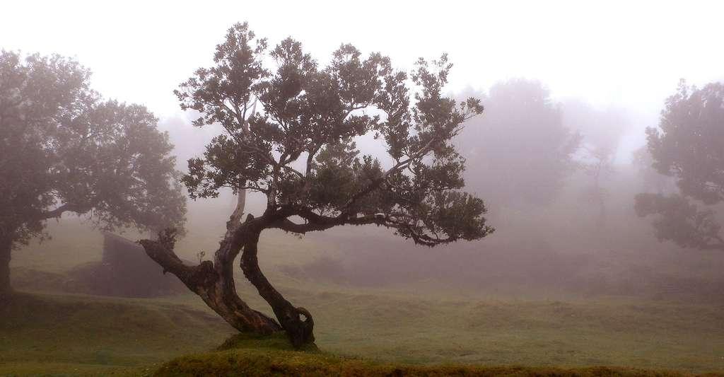 Forêt de Madère. © Jimfbleak, CC BY-SA 3.0