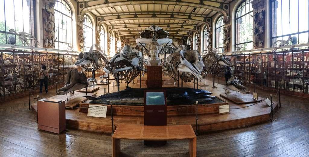 Galerie de paléontologie et d'anatomie comparée du MNHN. © Leo Reynolds, Flickr, CC by-nc-sa 2.0