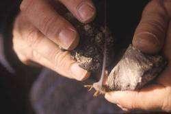 Allumage d'un brin d'amadou au briquet à marcassite, © Photo Berthoumieux - J.Collina-Girard