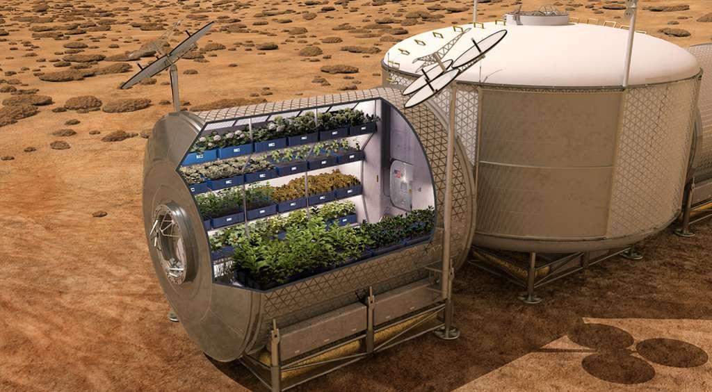 La Nasa envisage très sérieusement de cultiver sur Mars, des produits frais. © Nasa