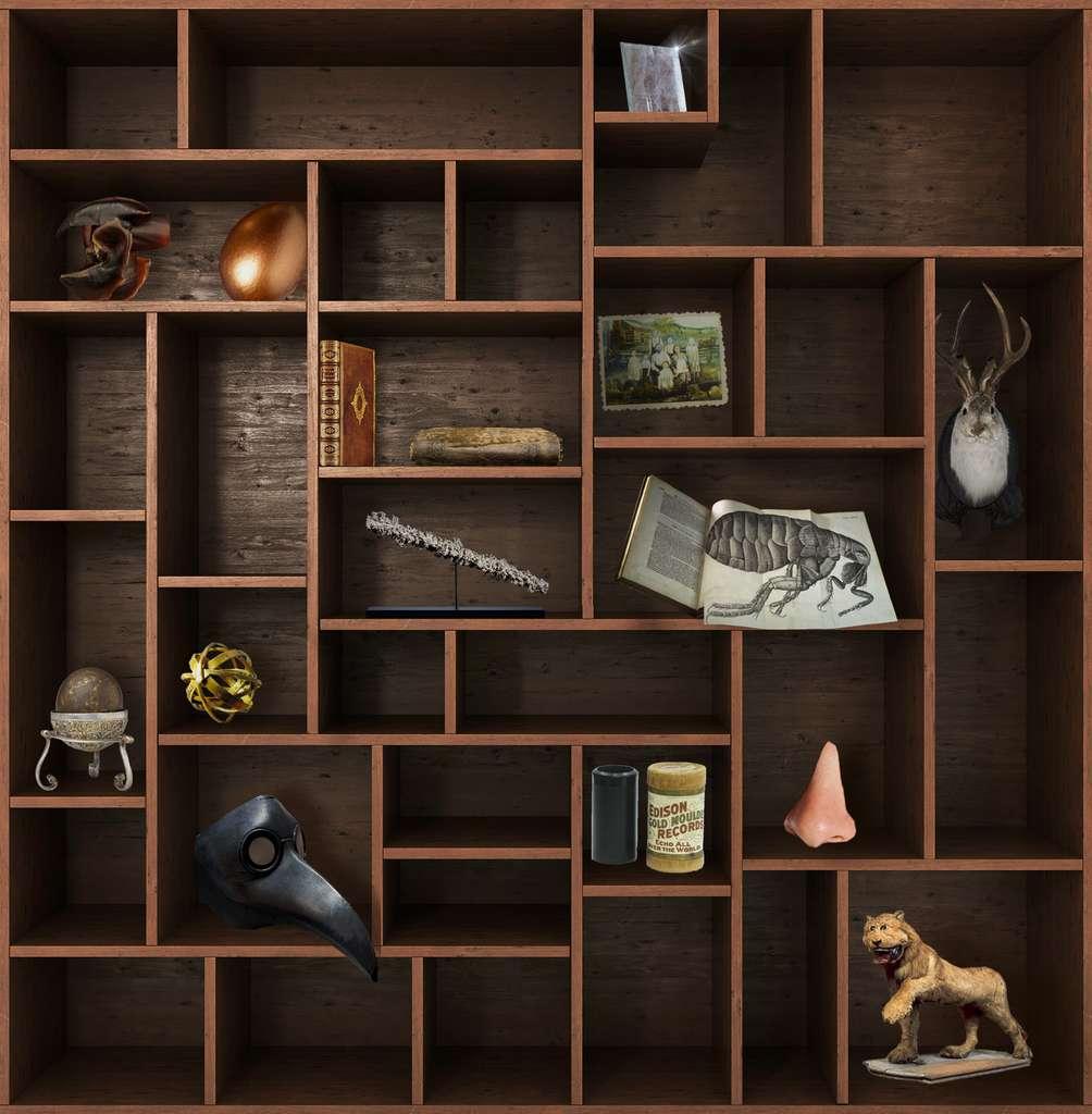 Rendez-vous dans deux semaines pour un nouveau chapitre du Cabinet de curiosités. © nosorogua, Adobe Stock, Futura