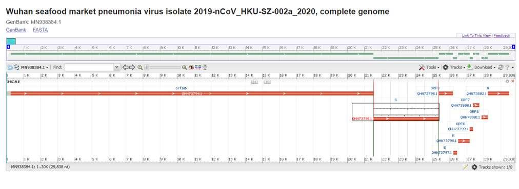 Le génome complet du Sars-CoV. L'échelle supérieure référence la taille totale du génome (en kilo paire de base) ainsi que celle des gènes codants représentés par des barres rouges. © NCBI Reference Sequence