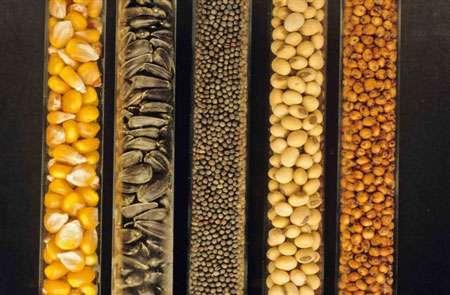 La diversité des espèces et variétés végétales passe par les semences © GNIS