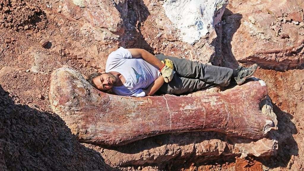 Photo prise au moment des fouilles, en 2013, montrant le fémur de 2,40 m de long. Le paléontoloque Diego Pol, du Musée de paléontologie Egidio Feruglio, pose devant lui. © Museo paleontologico Egidio Feruglio (MEF)