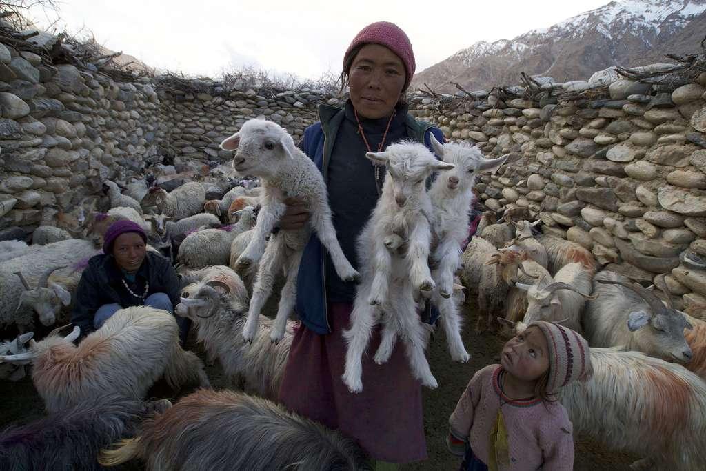 Des nouveaux venus à la bergerie du village