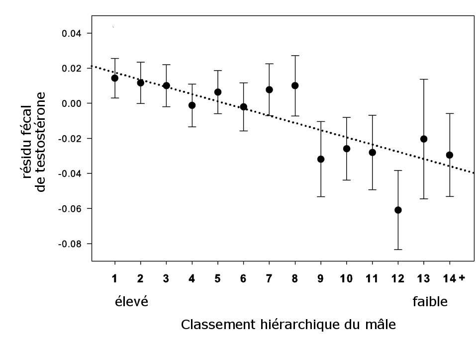 Indicateur de la quantité de testostérone présente dans les fèces des mâles, selon leur classement hiérarchique. © Guesquière et al., 2011