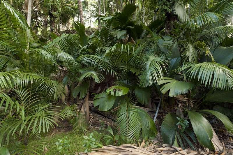 La forêt protège les sols de la pluie et limite l'érosion (Seychelles). © Alexis Rosenfeld, reproduction interdite