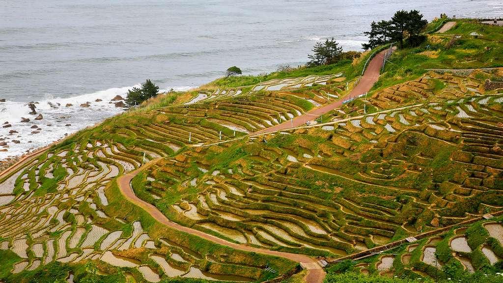 Rizières de la péninsule du Noto Hanto